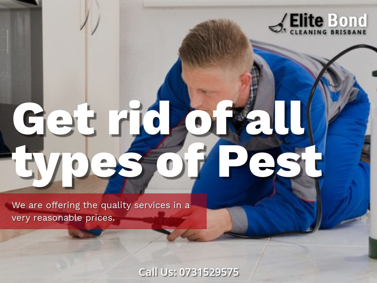 GET RID OF ALL PESTS WITH OUR CLEANING TIPS